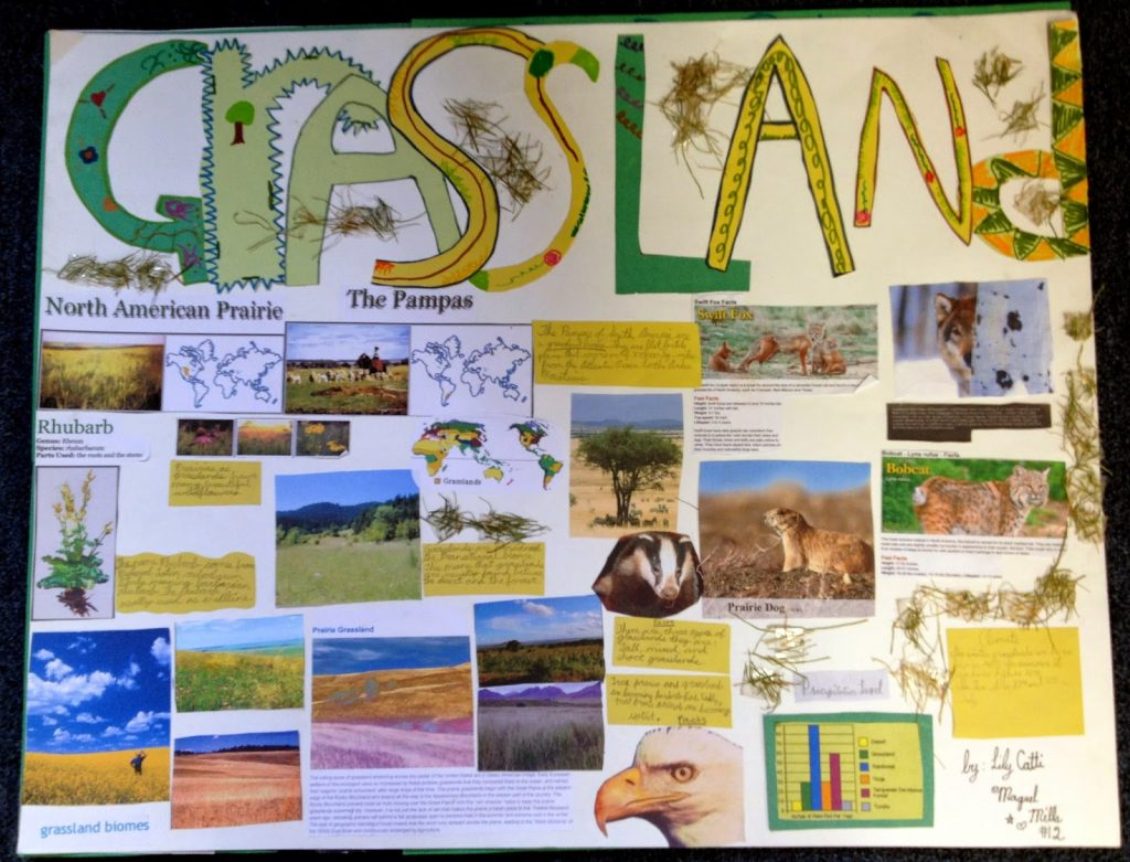 This 10-page packet includes everything you need to assign and grade a poster project in a science study of the different biomes. This simple and engaging project will assess your students understanding of the different biomes while also helping to develop their researching andpublic speaking skills. This project can be completed individually, in pairs, or in groups. Resource created by Jessica Lawler @ Joy in the Journey.